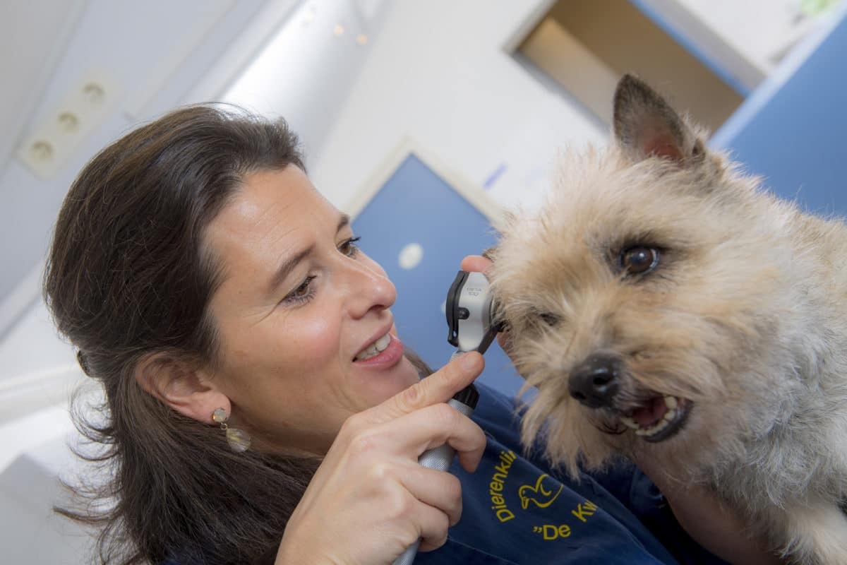 Medewerkster De kwaker hond onderzoek